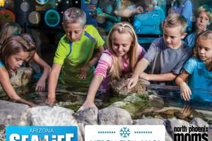 North Valley Moms Blog - Arizona Sea Life Thumbnail