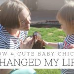How 4 Cute Baby Chicks Changed My Life