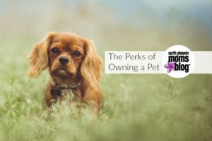 owning a pet