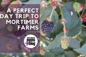 a perfect day trip to mortimer farms