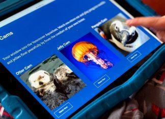 online oceans