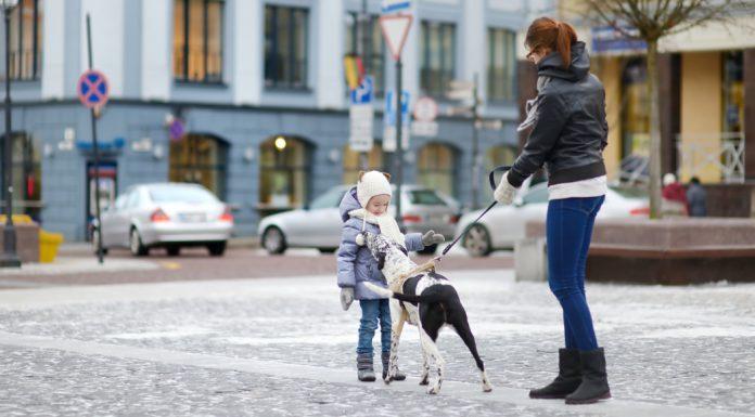 greet a dog