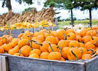 Arizona Pumpkin Patch Guide 2021